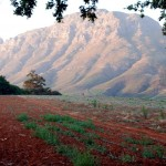 Gerodete, aber lebendige Erde, Voraussetzung für gesunde Reben