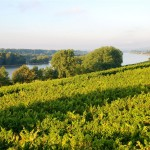 Wein und Rhein, das gehört zusammen und der Rheingau ist mitten drin